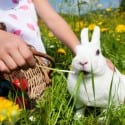 Rocky Mount Easter Events