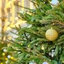 Rocky-Mount-Christmas-Parade-Belmont-Lake-Preserve