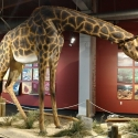 Rocky-Mount-Childrens-Museum