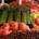 nash-county-farmers-market-south-lakes